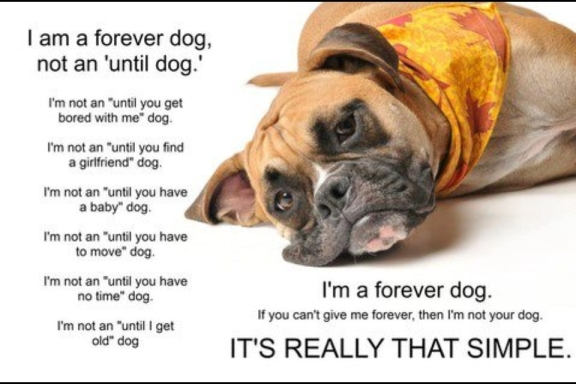 a forever dog