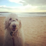 barker - beach walk