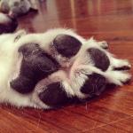 beary - paw love
