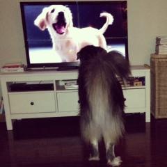 secret life of dogs 1