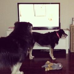 secret life of dogs 2