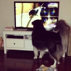 secret life of dogs 3