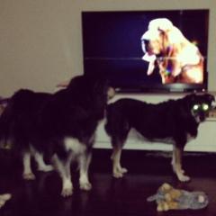secret life of dogs 4