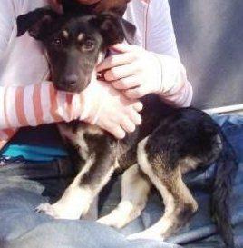 adopted - bella
