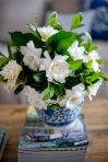 gardenia - a favourite of mummas