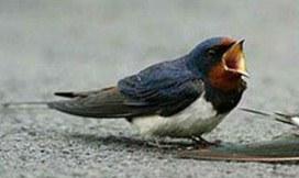 sad birdy