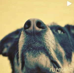 #pet {flipagram weekend project}
