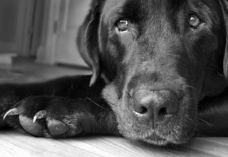 Depression is often referred to as 'the black dog' .. the dog no-one seems to want.