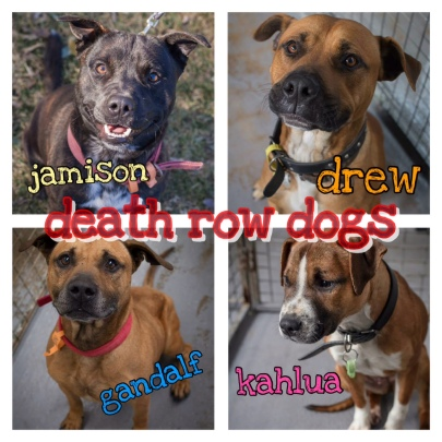 death row dogs