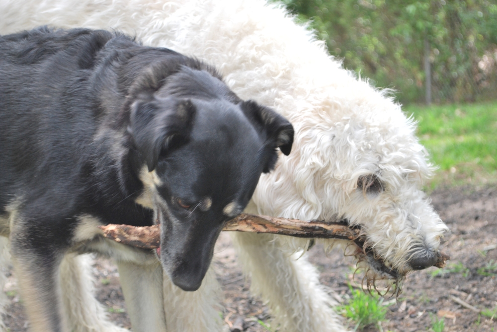 Bella and Barker