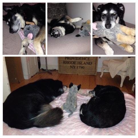 Jacko & Bella - firm friends