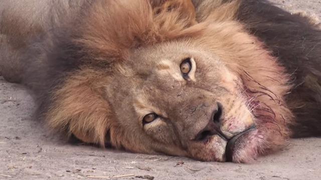 RIP Cecil