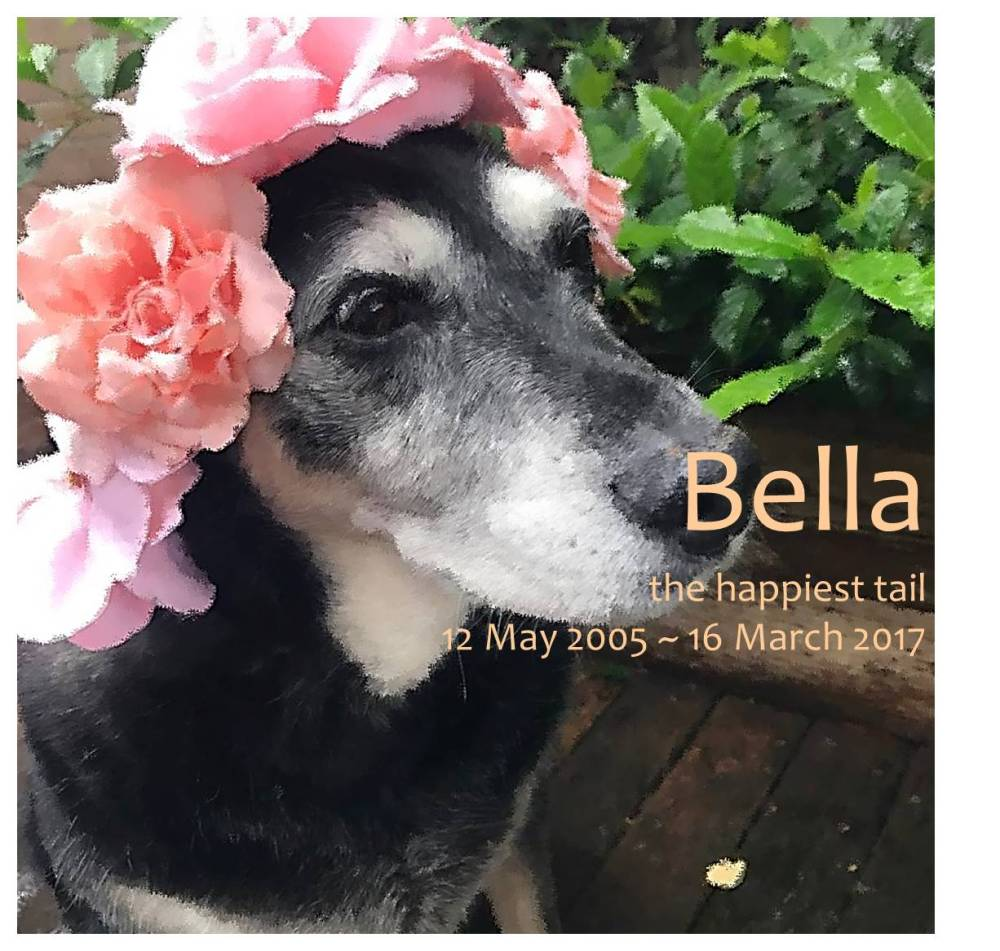 bella soft